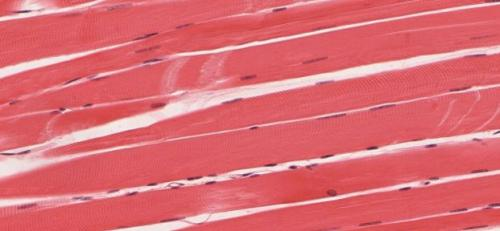 Gene therapy for Duchenne muscular dystrophy safely preserves muscle function