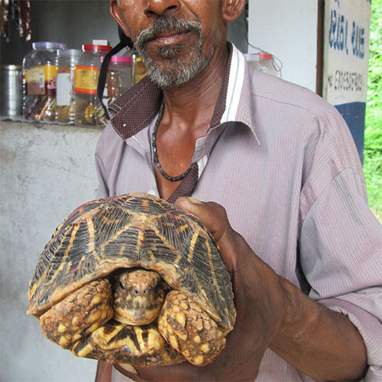 Counting Stars Illegal Trade Of Indian Star Tortoises Is A Far Graver Issue