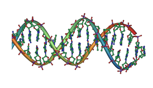 New study discovers the three-dimensional structure of the genome replication machine