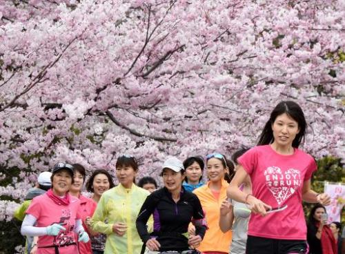 Blooming Row Over Cherry Blossom Splits China Korea Japan