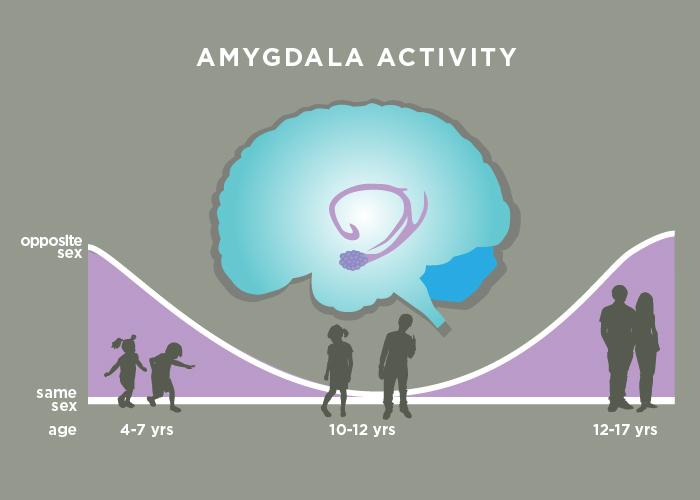 Fear circuit extends far beyond the amygdala, research shows