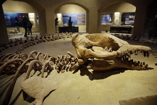 Egypt unveils rare whale fossil museum to boost tourism (Update)