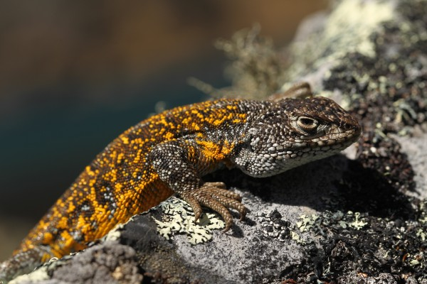 Expedition Scientists In Bolivia Discover Seven Animal Species In World S Most Biodiverse Protected Area