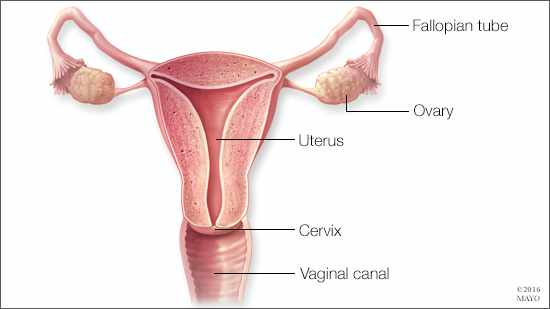 Ovarian Removal To Prevent Ovarian Cancer Should Not Be An Option For Most Premenopausal Women Research Finds