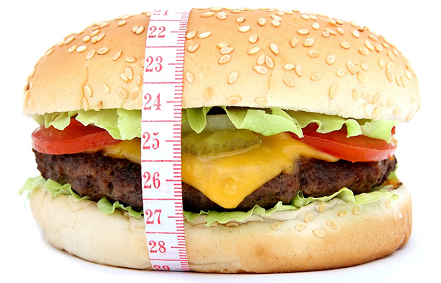 high fat diet leads to obesity