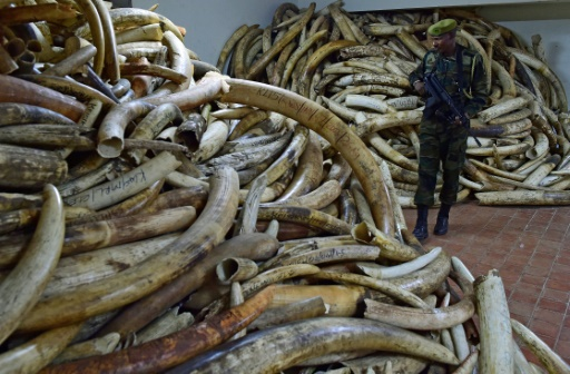 Hope For Elephants As Ivory Prices Fall Conservation Group