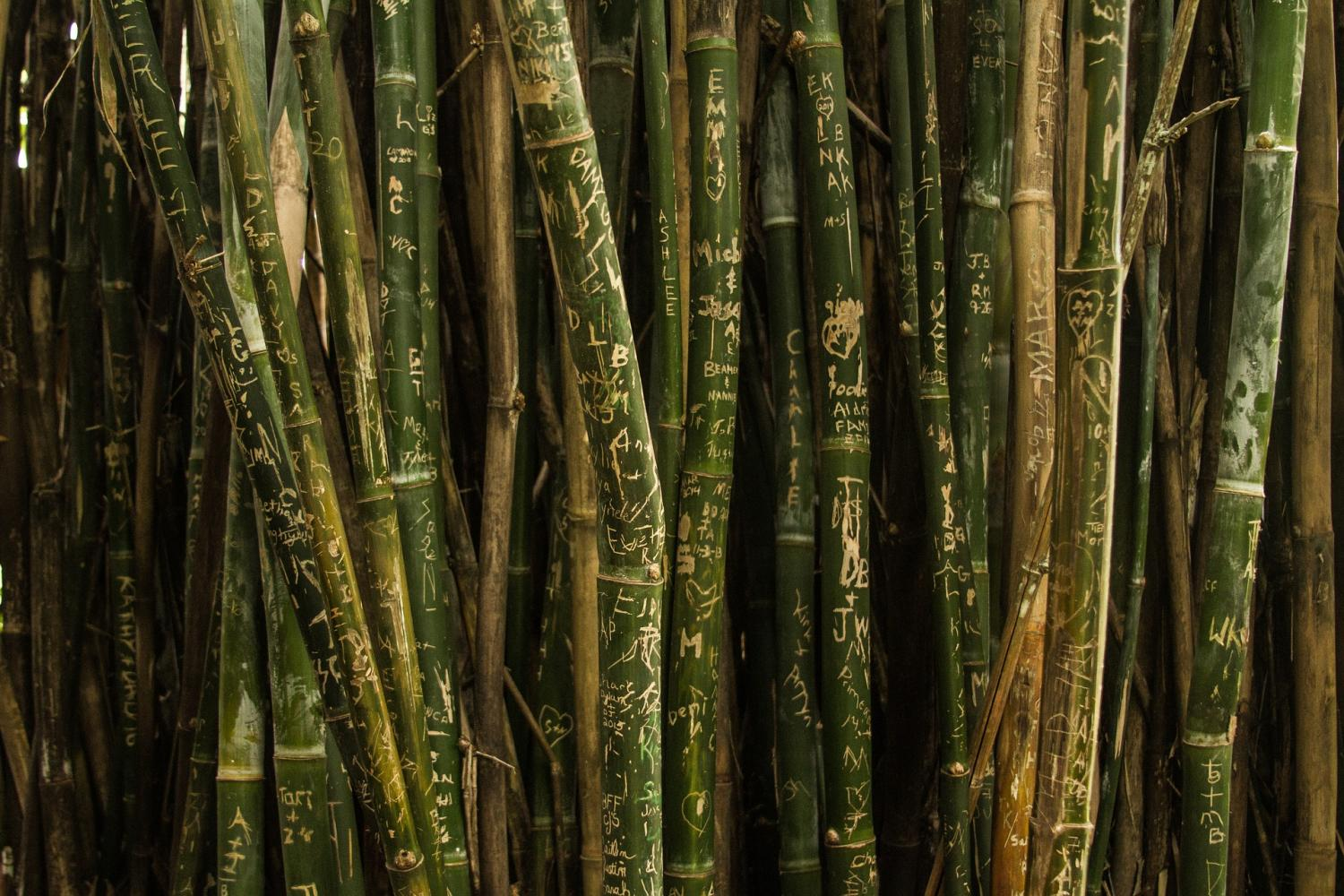 Replacing Trees With Bamboos Halves The Carbon Storage Capacity Of