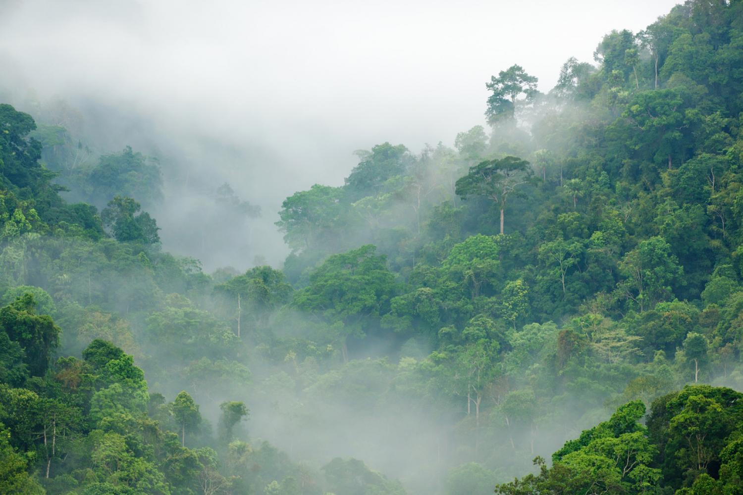 Long-term fate of tropical forests may not be as dire as believed ...