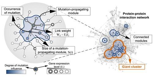 Mutant Gene Network In Colon Cancer Identified