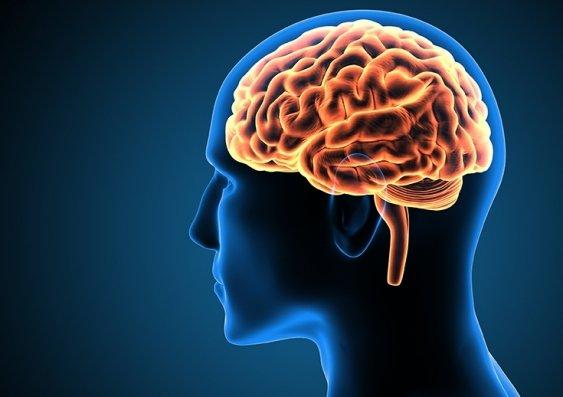 Neuroscientist discovers hidden region in the human brain