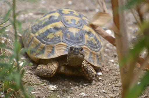 Turtles Can Make Great Pets But Do Your Homework First