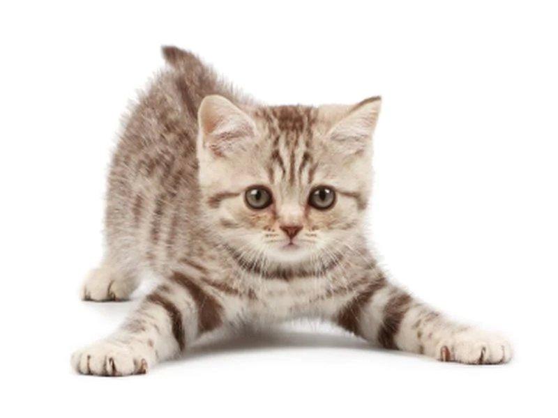 thecatsmeowt.'
