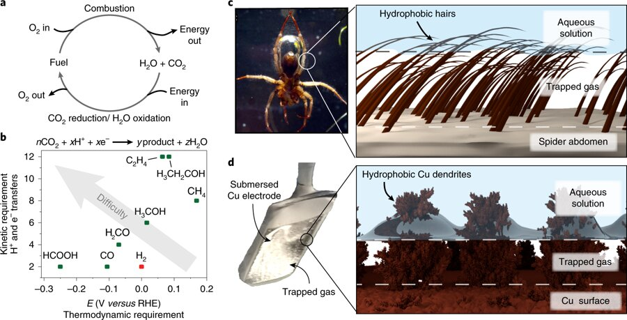 Mimicking the diving bell spider to improve carbon conversion into fuels