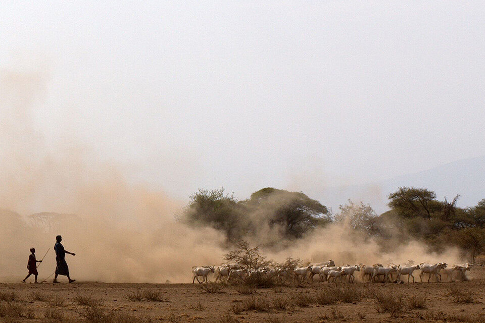 Ancient DNA Tells The Story Of The First Herders And