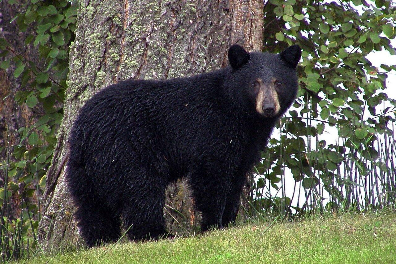 Black Bear Nutrition