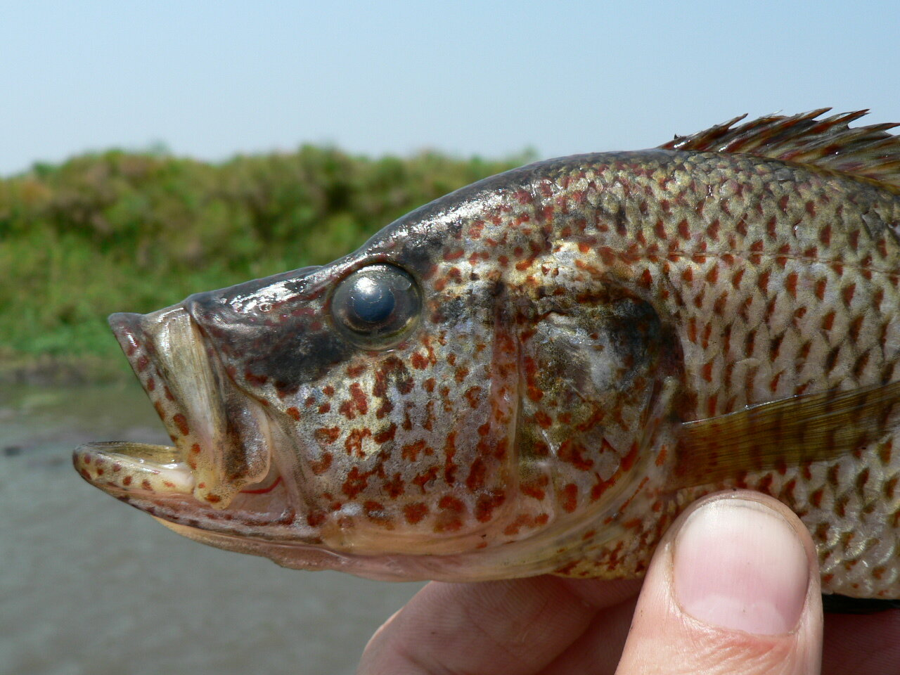 photo of Female fish can breed a new species if they aren't choosy about who is Mr. Right image