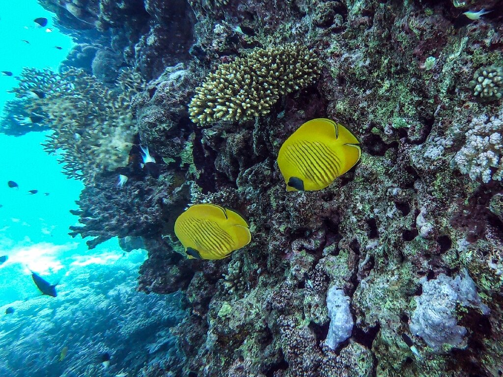 Egypt S Rebounding Tourism Threatens Red Sea Corals