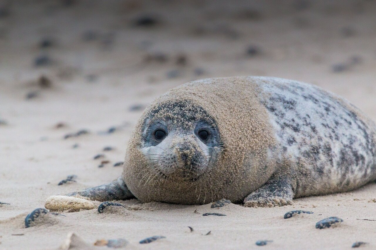 Researchers study catastrophic disease events in marine mammals