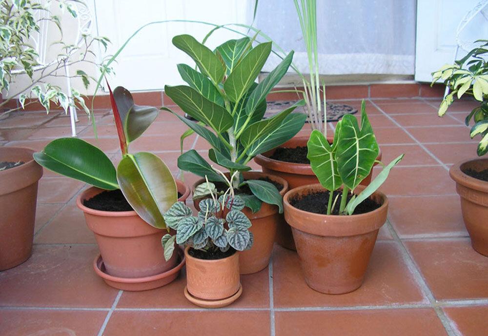 Light exposure key for growing successful houseplants