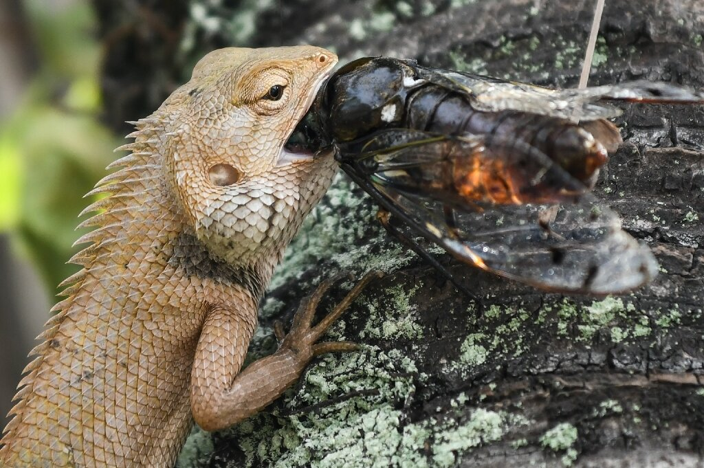 At 2C warmer, lizards eat less healthily: study