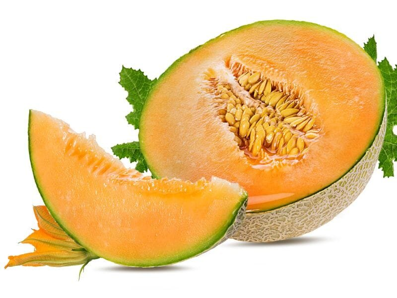 Melons Are Powerhouses In Taste Nutrition Cantaloupe requires high temperatures during the summer and plenty of water for the successful development. melons are powerhouses in taste nutrition
