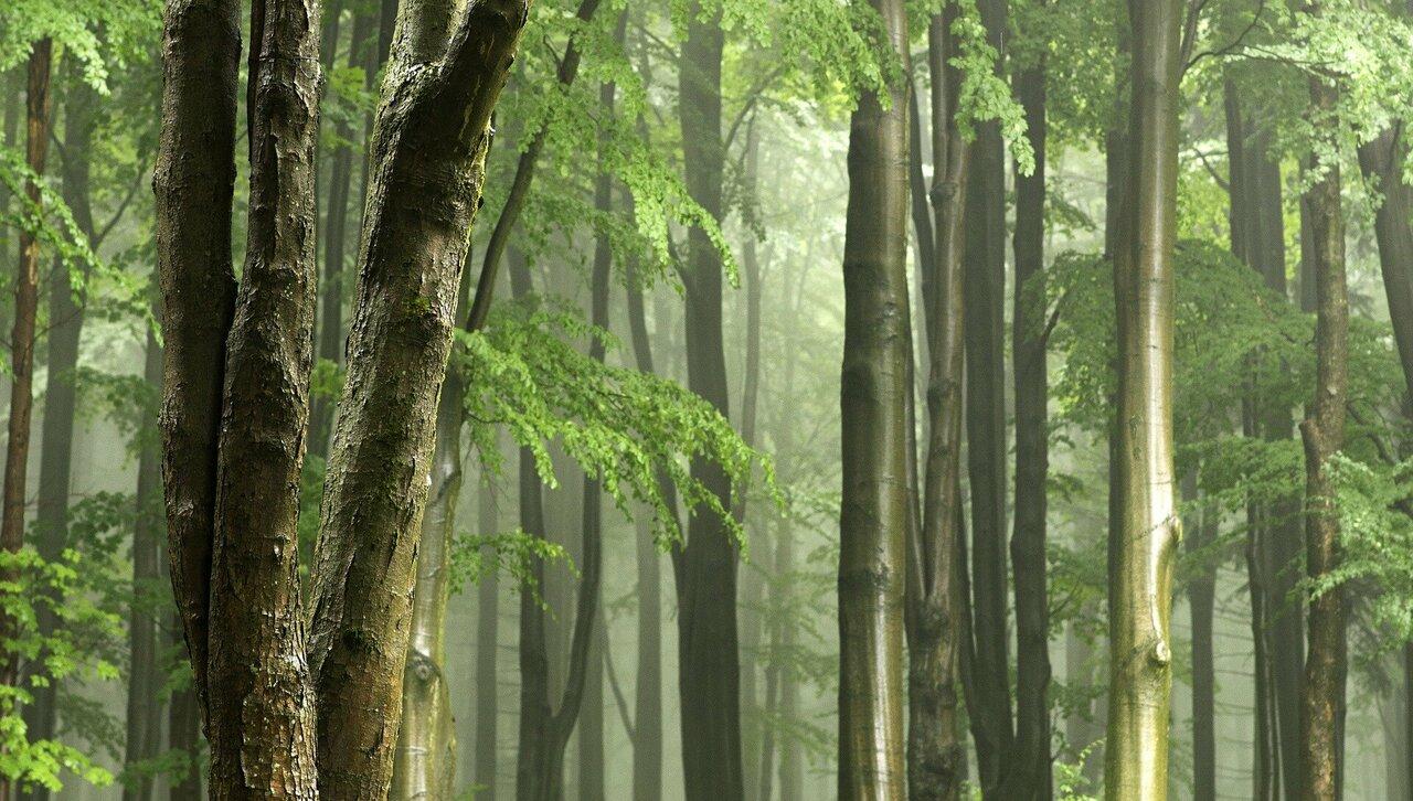 Rainforest Small