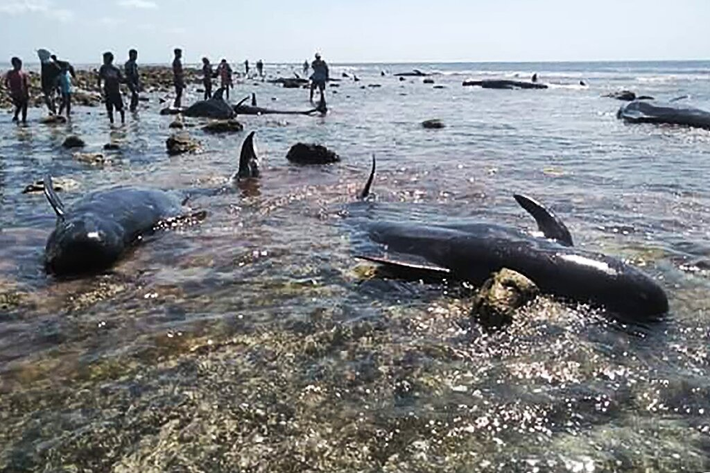 photo of Seven stranded whales found dead in Indonesia image