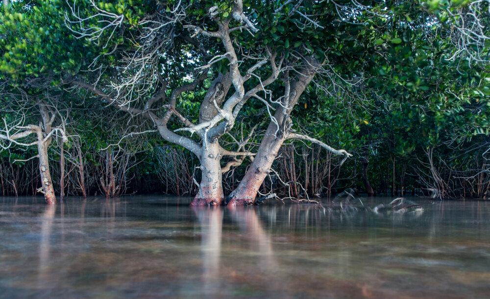 Restoring Earth's natural defenders