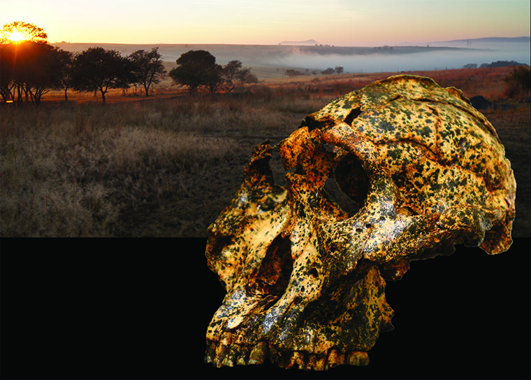 Newly discovered fossil shows small-scale evolutionary changes in an extinct human species