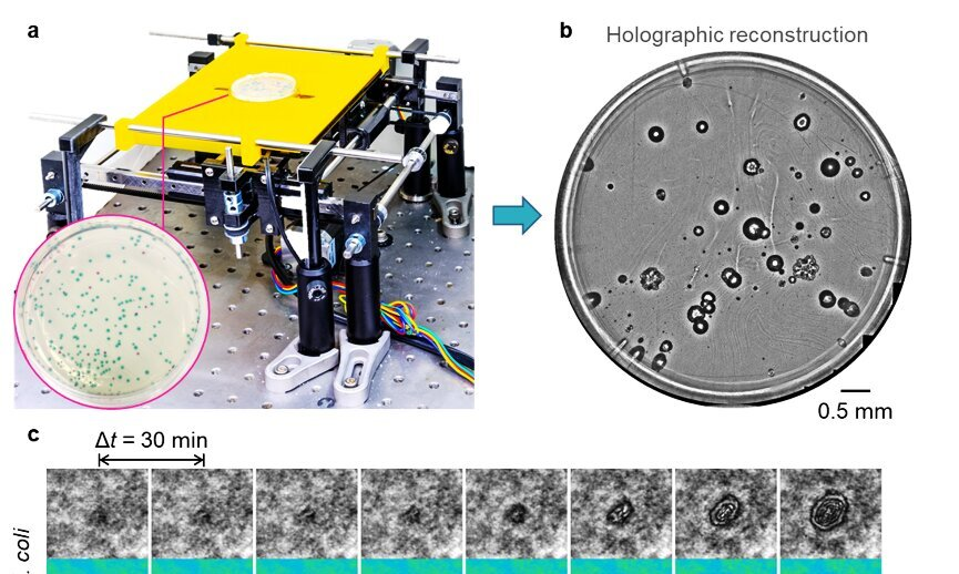 Deep learning enables early detection and classification of live bacteria using holography - Phys.org