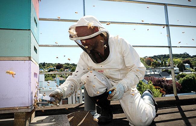 Study reveals similarities between bee brains and human brains