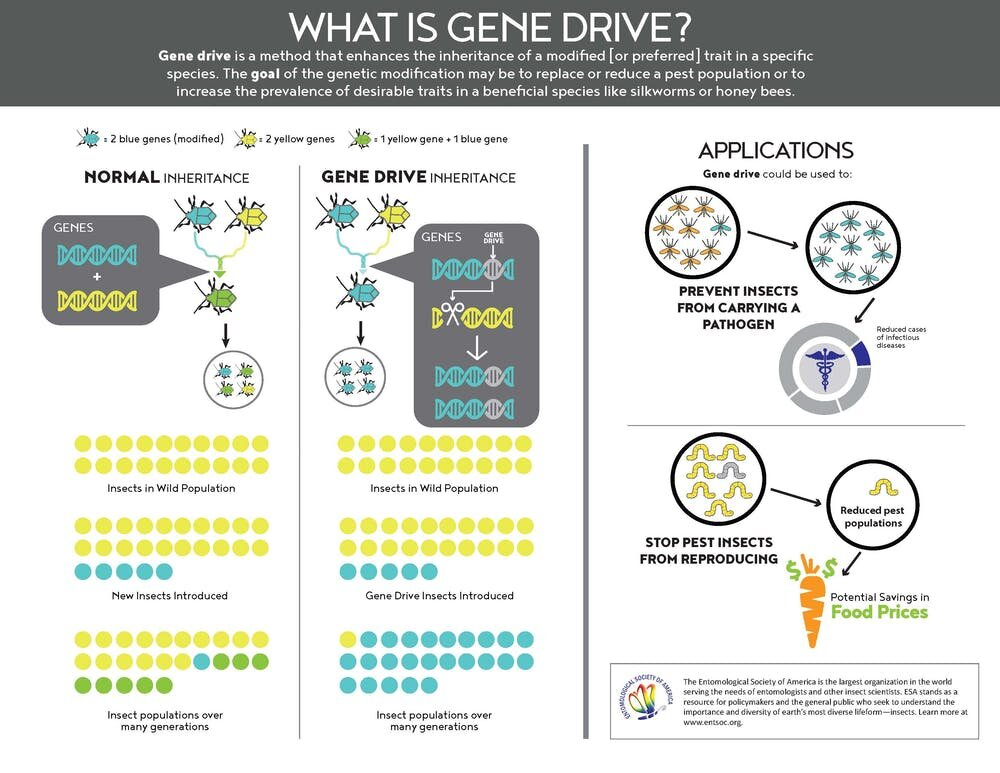 An argument for gene drive technology to genetically control insects like mosquitoes and locusts