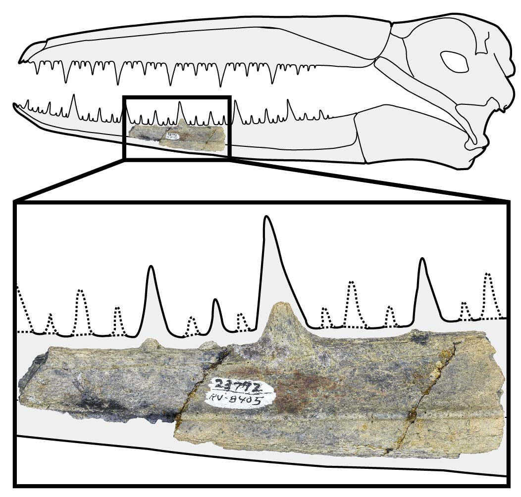 Antarctica yields oldest fossils of giant birds with 6.4-meter wingspans