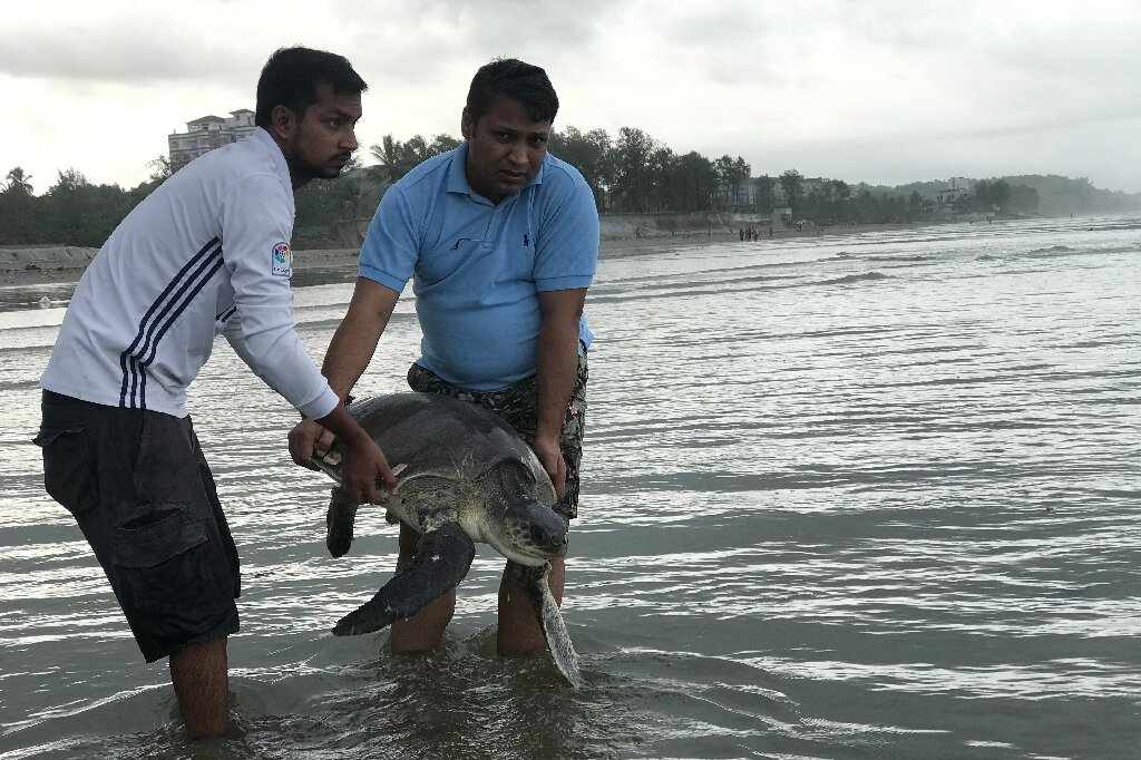 Race to rescue turtles entangled in plastic on...