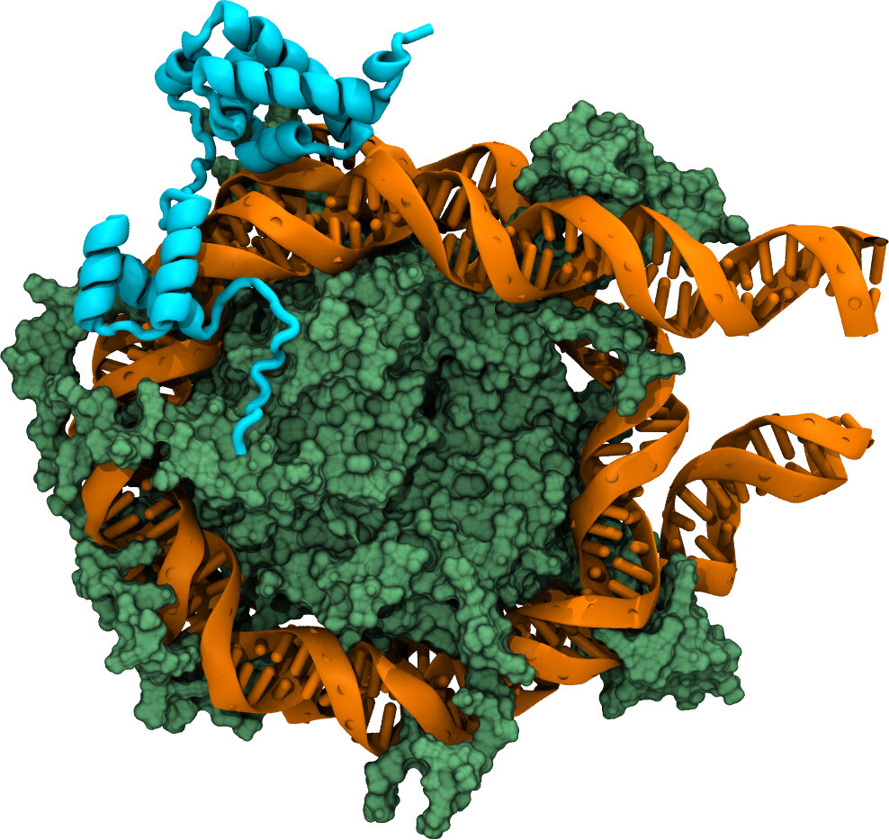 Computer simulations visualize how DNA is recognized to convert cells into stem cells
