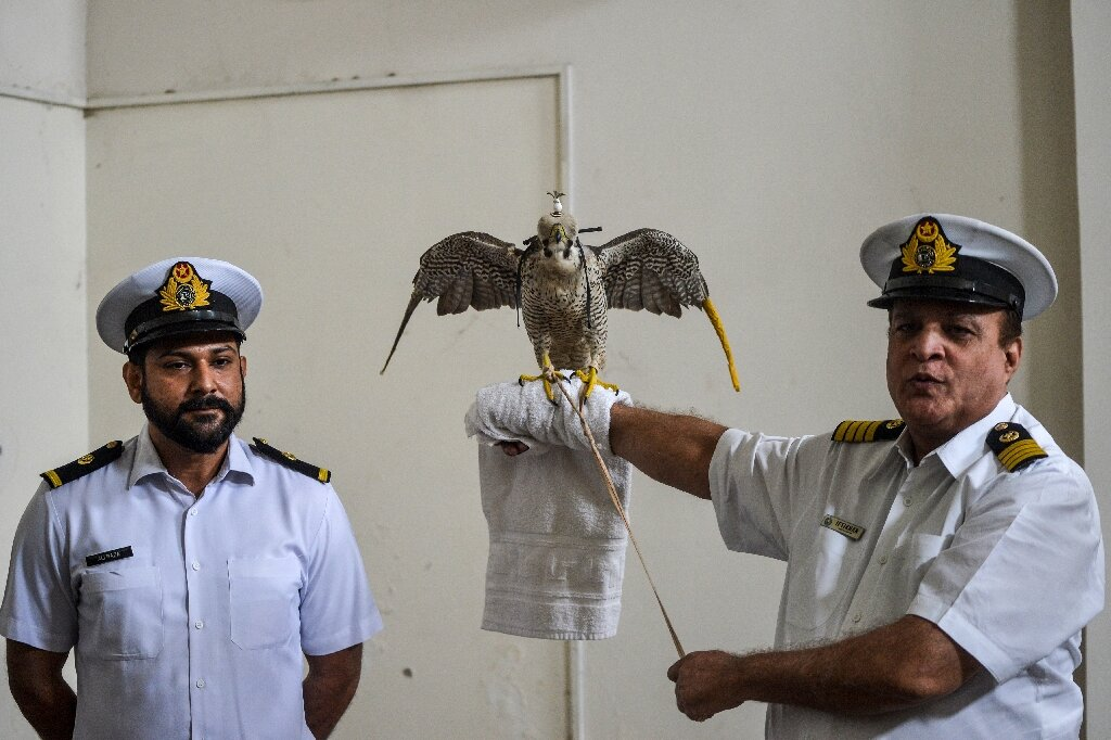 photo of Pakistan foils attempt to smuggle endangered falcons image