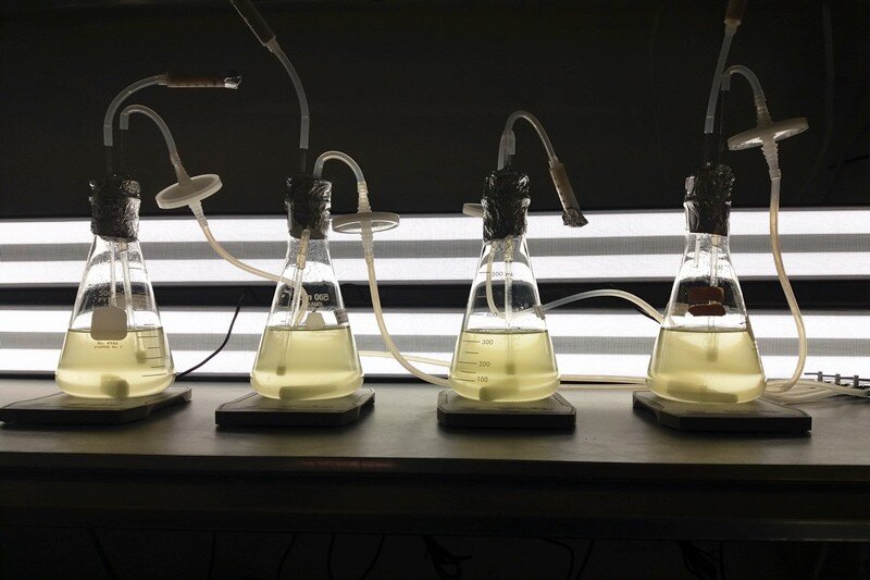 How harmful algae respond to rising water temperatures