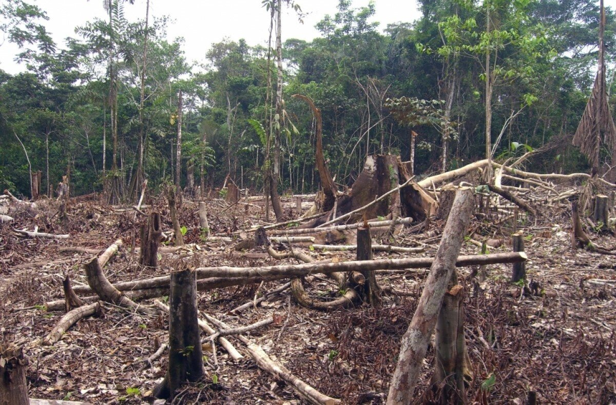 photo of Malaria in the Amazon increases with deforestation image