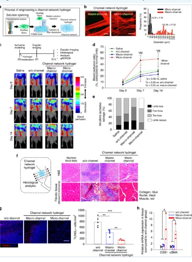 Microchannel network hydrogel-induced ischemic blood perfusion connection