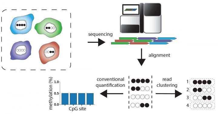 Novel software reveals molecular barcodes that distinguish different cell types