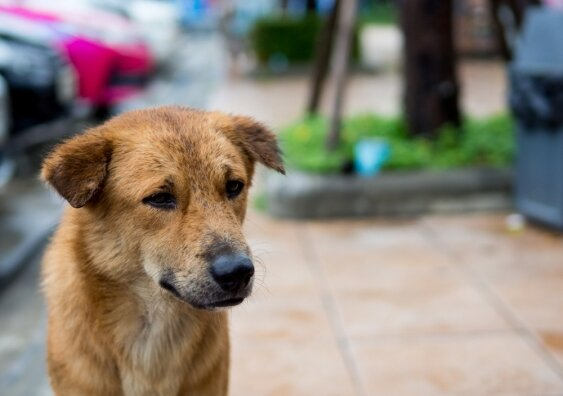 Pets: The voiceless victims of the COVID-19 crisis