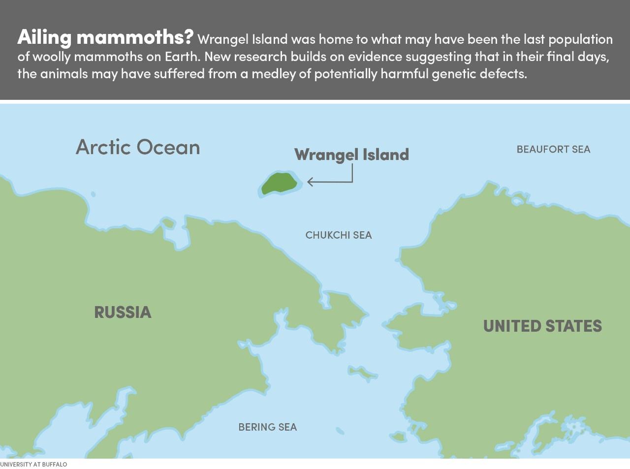 Scientists resurrected a Wrangel Island mammoth's mutated genes