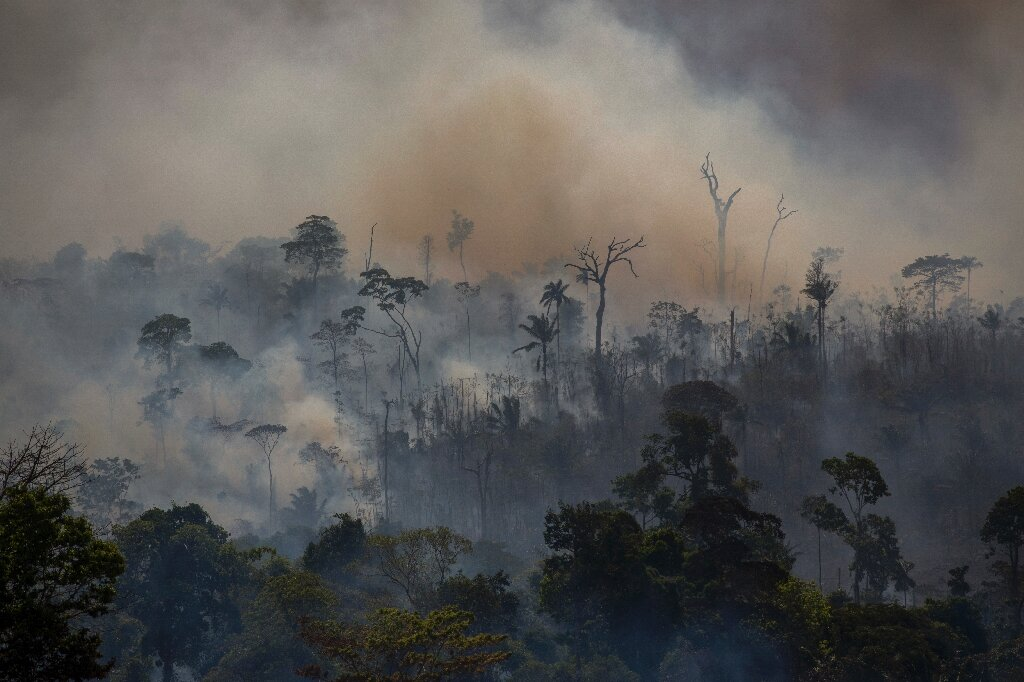 Amazon deforestation increases 25 percent in Brazil