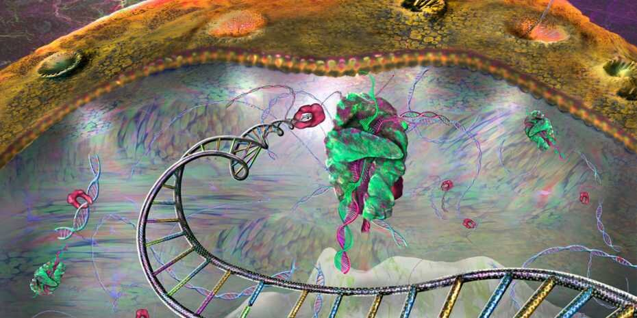 The amazing travels of small RNAs