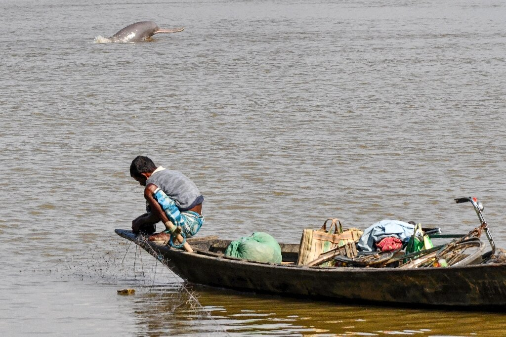Killing of rare river dolphins sparks poaching fears in Bangladesh lockdown