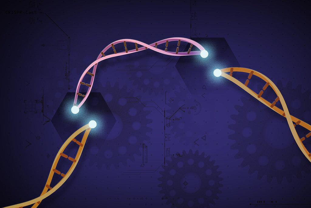 Researchers establish new viable CRISPR-Cas12b system for plant genome engineering