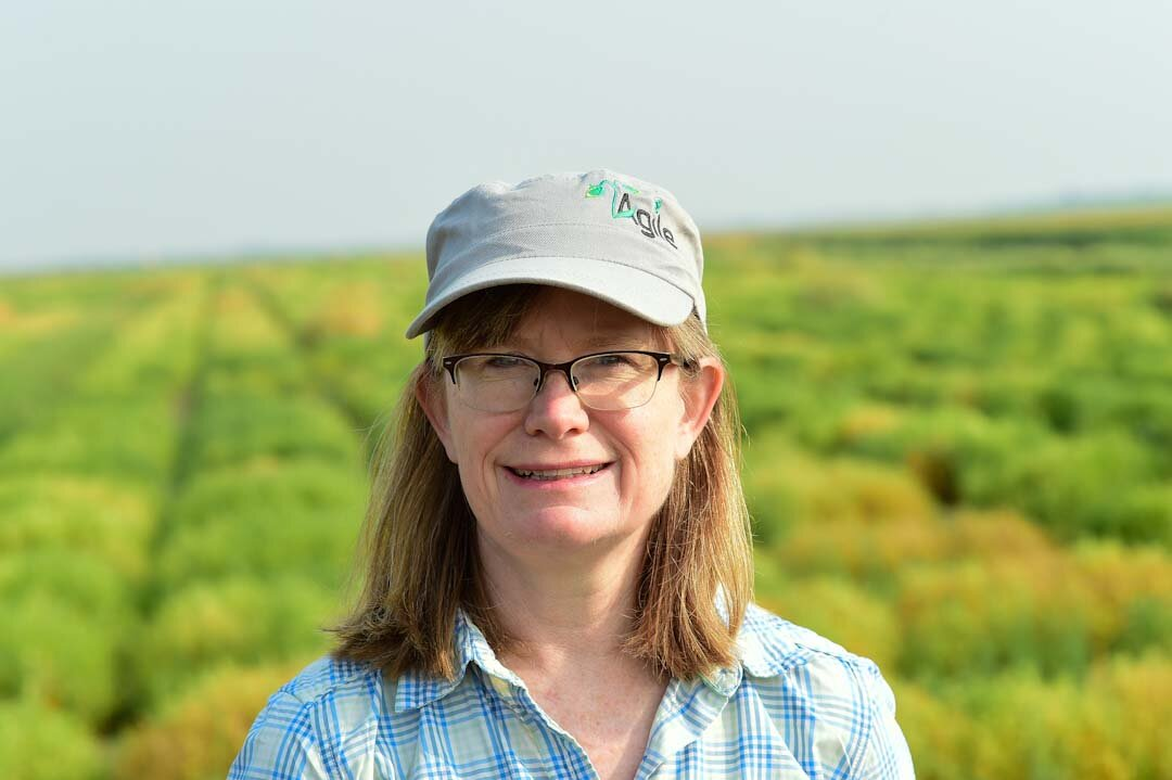 Scientists develop model to identify best lentils for climate change impacts