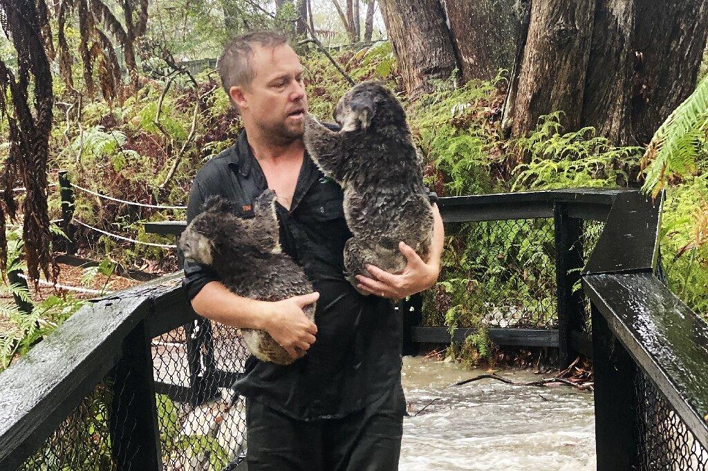 Fires Then Floods How Much Can A Koala Bear