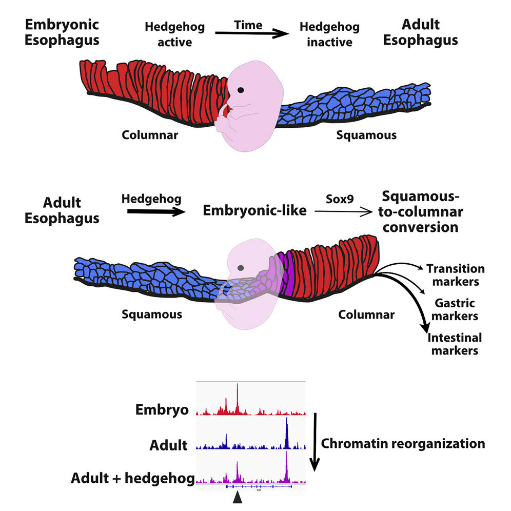 Discovery of the mechanisms involved