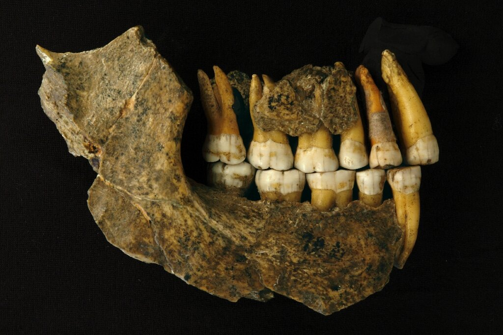 Neanderthals disappeared from Europe earlier than thought, says study - Phys.org